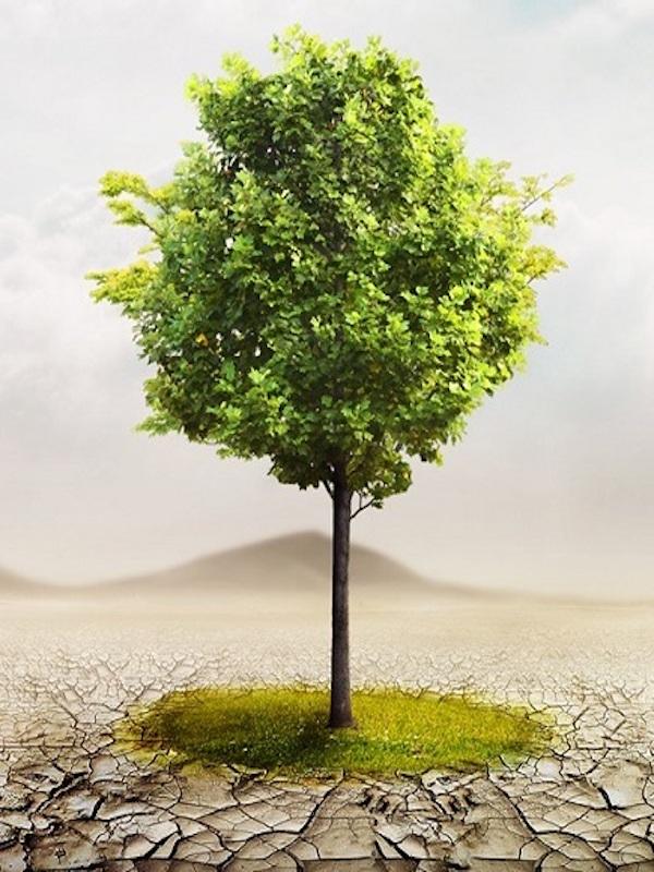 Pasito a pasito hacia el año 2050 con 'La Ley de Cambio Climático y Transición Energética'