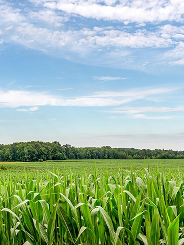 Guyana quiere el apoyo de Brasil para impulsar su liderazgo agrícola en el Caribe