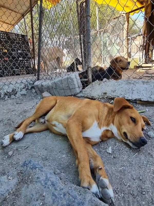 Subirán notablemente las penas contra el maltrato animal