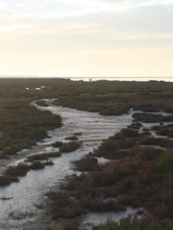 El 'Programa Doñana 2005' sin ejecutar y descafeinado