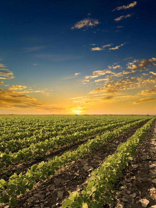 El calentamiento global afectara muy negativamente a la producción de alimentos