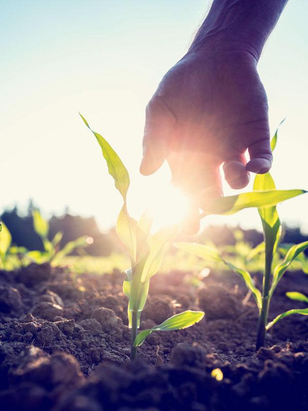 La producción ecológica contra el calentamiento global