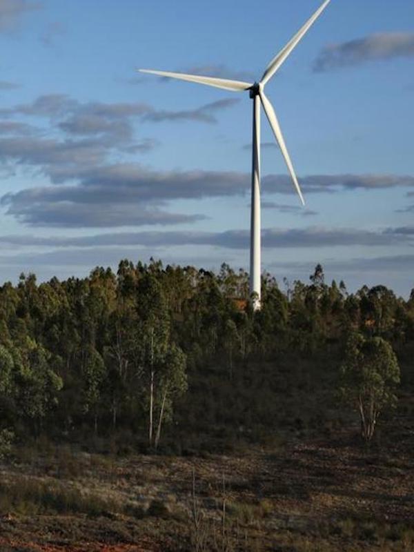 España defiende la compatibilidad de las energías renovables y la protección de la biodiversidad