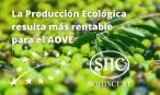 Producir AOVE de manera ecológica es mucho más rentable
