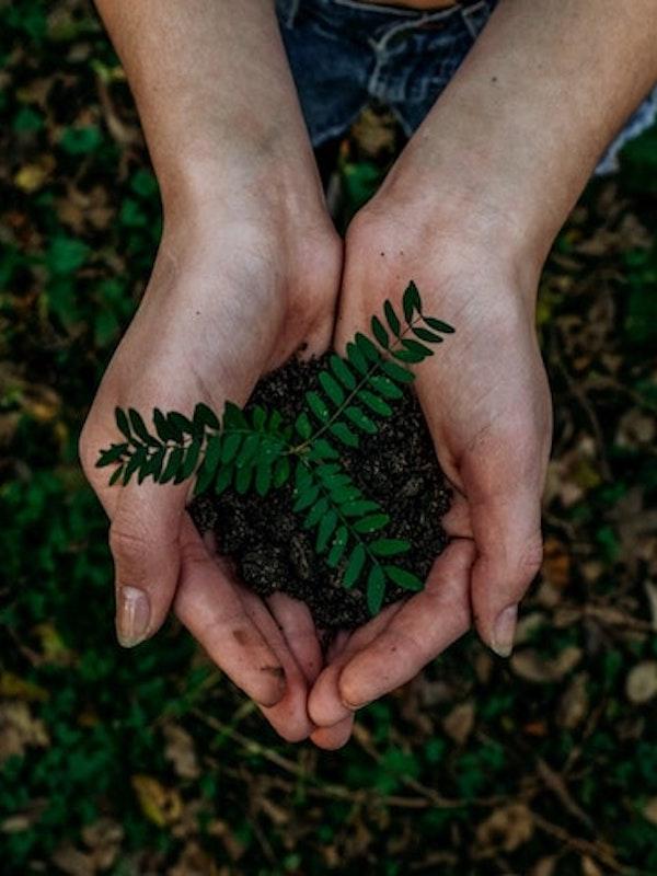 México reactiva el Premio al Mérito Ecológico