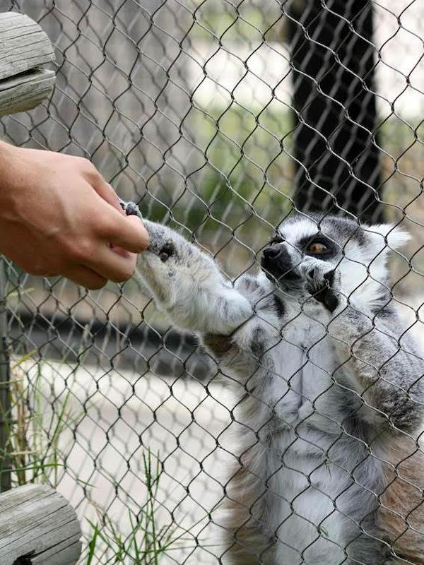 Animales domésticos sí, mascotas salvajes NO
