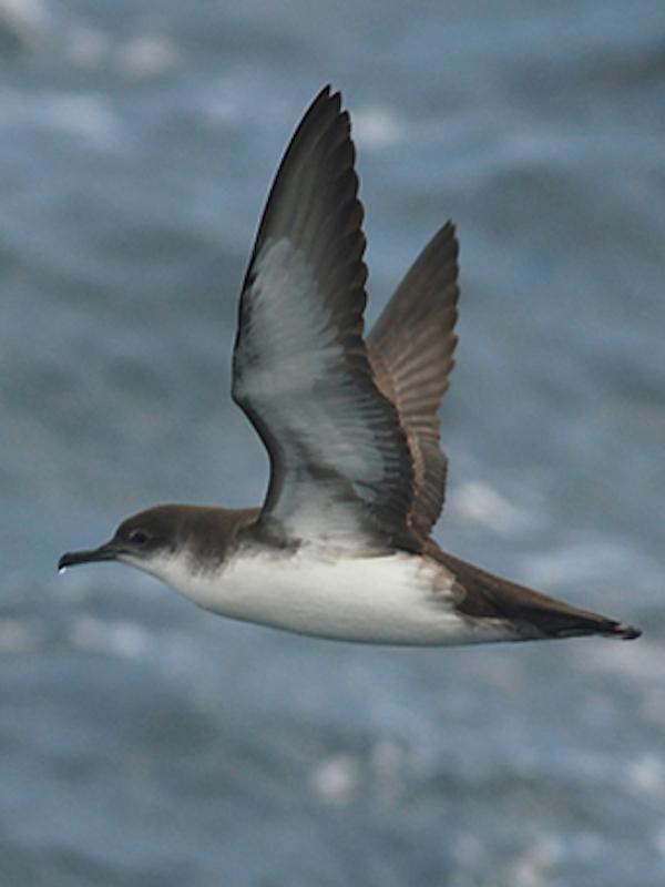 Seguimiento de aves marinas y cetáceos en Parc Tramuntana