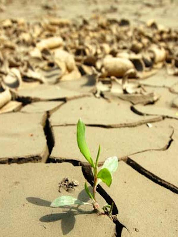 Cambio climático es el 'gran ausente' en los currículos de la enseñanza primaria de toda España