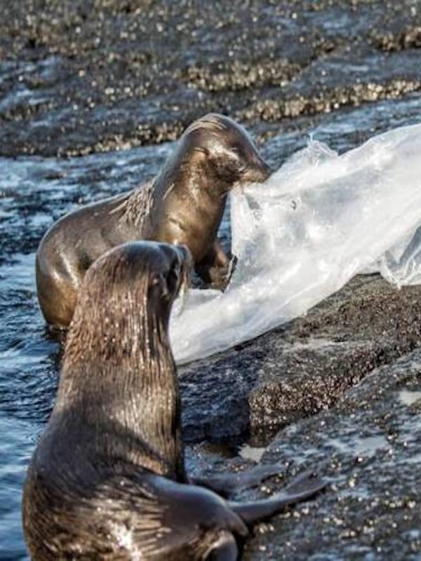 La fauna de las islas Galápagos 'victimas' del plástico