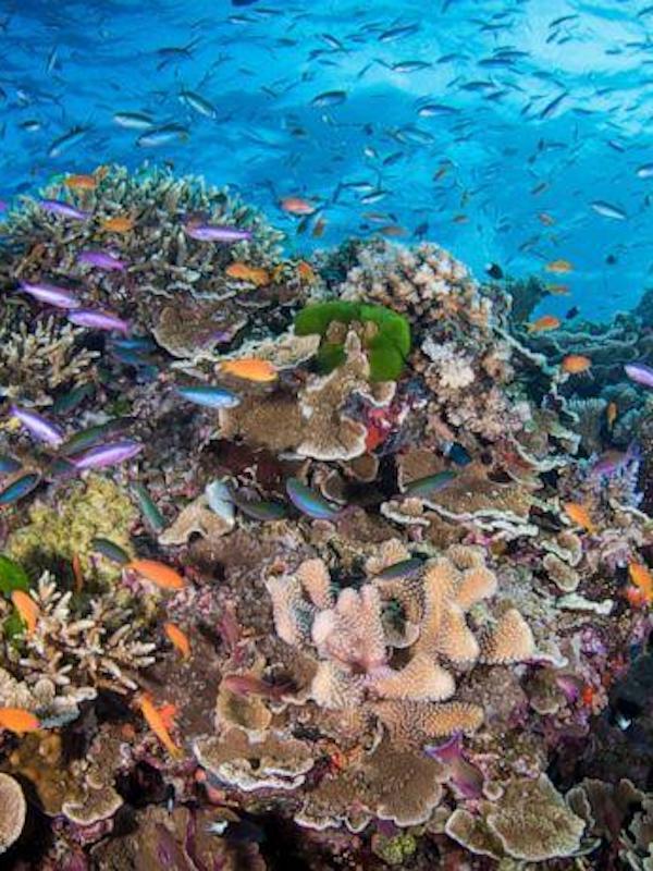 Protegiendo los arrecifes de coral del calentamiento global