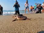 Liberando tortugas vulnerables