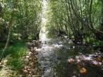 Mejorando la reserva del Río Negro