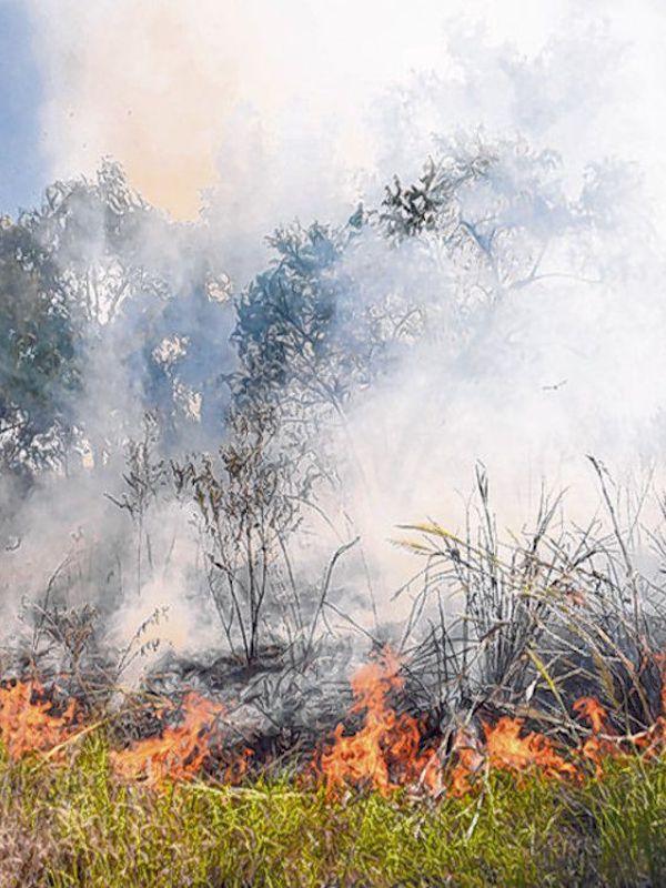 El humo de los incendios también diezma a los macacos