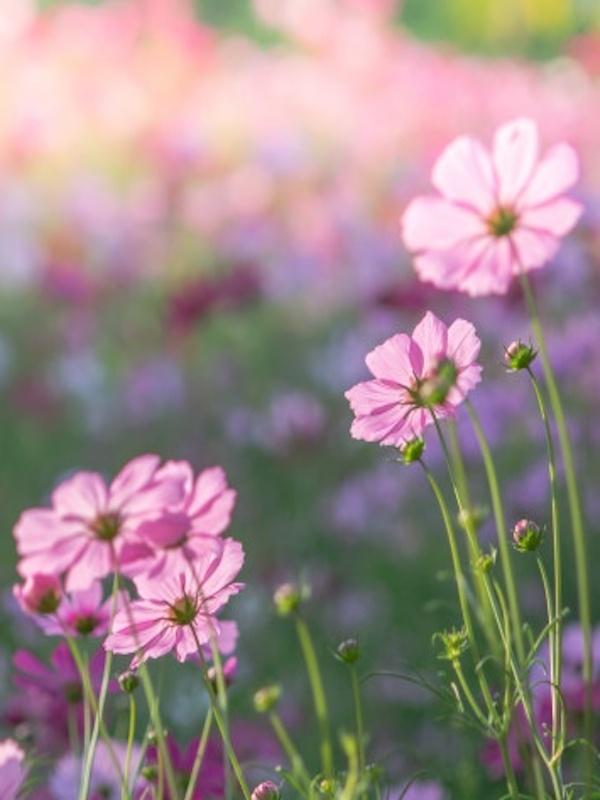 Día de la Flor 2021