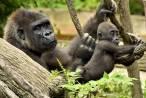 Por fin una Ley para los grandes simios