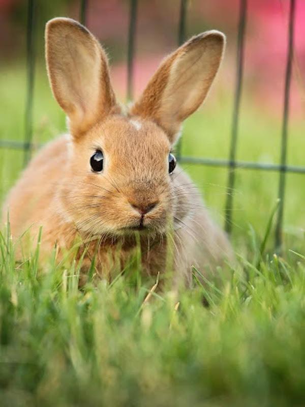 Día Internacional del conejo 2021