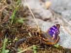 Las mariposas eligieron Santander