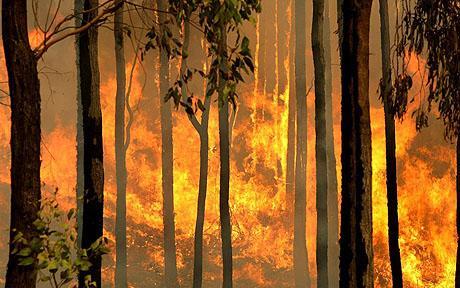 Menos del 1 % de los responsables de los incendios forestales en España son condenados