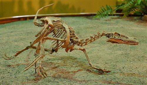 La mayoría de especies de dinosaurios tenían escamas