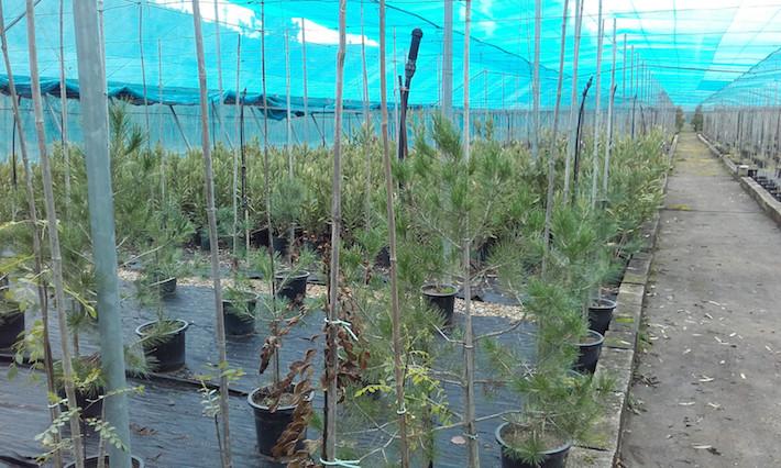 Granada recibe 16.000 plantones para reforestaciones participativas