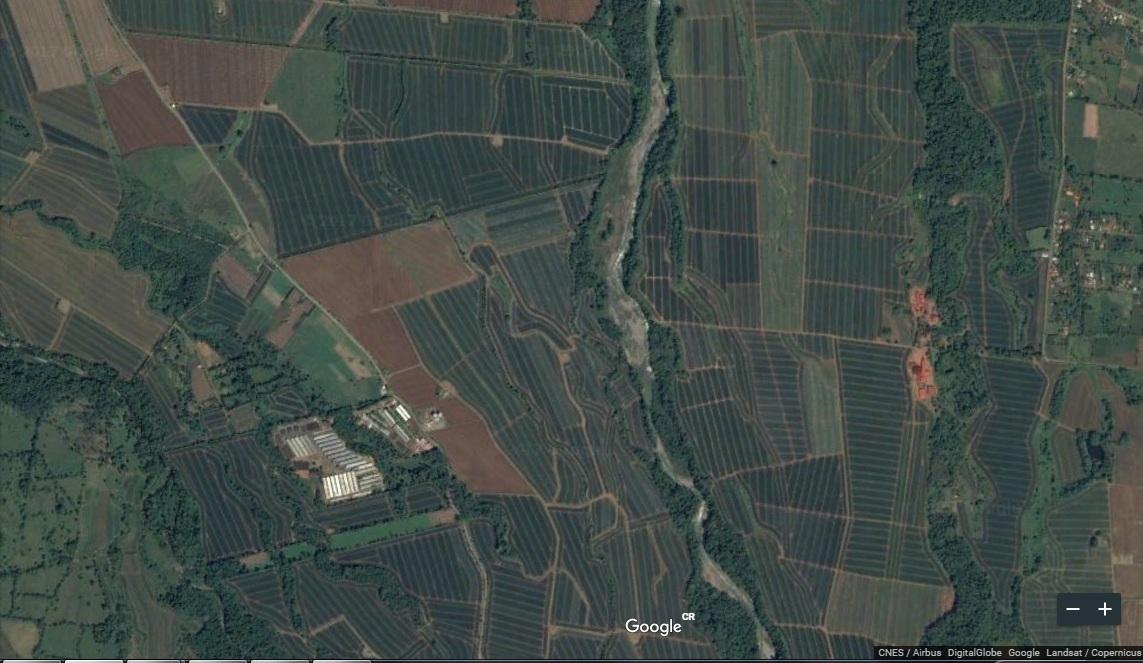 Costa Rica. Paralizan 3 fincas piñeras por orden de Setena en Zona Norte