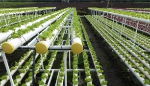 Tecnología LED para unos invernaderos más eficientes