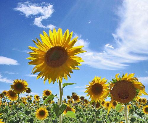 España duplicará su producción de biodiésel en 2010