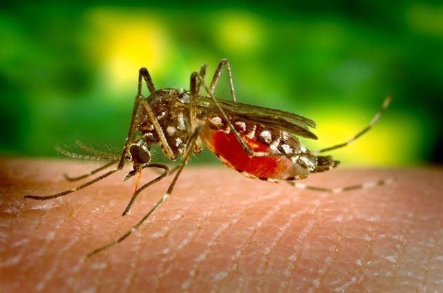 El cambio climático podría provocar la llegada del dengue a Europa