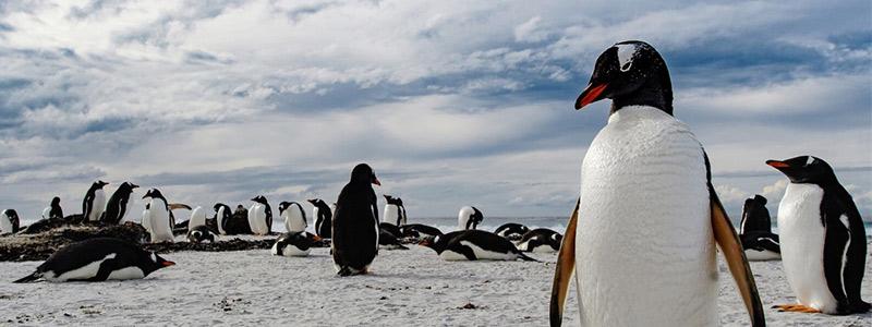 Mexicanos fotografían la diversidad de las Islas Malvinas