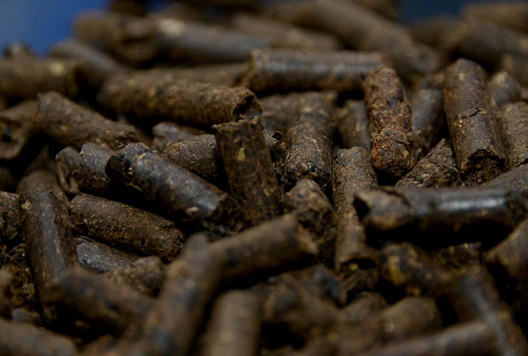 Costa Rica. Cafetaleros podrán utilizar la broza del café para producir energía