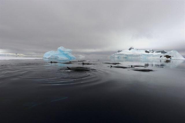 La fuente de un sonido misterioso en el Océano Antártico finalmente descubren que procede de las ballenas