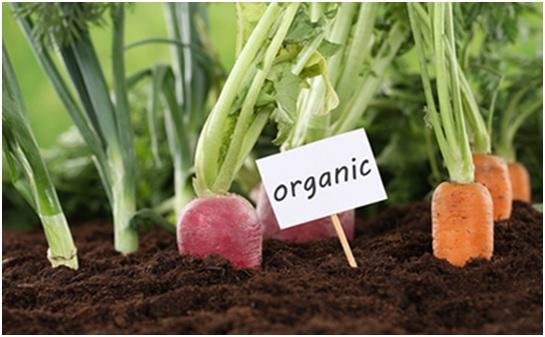 Hablemos de agricultura ecológica
