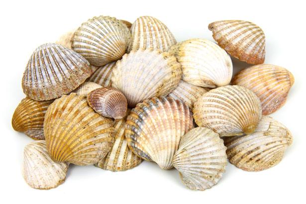 La conchas marinas 'esquilmadas' por el turismo masivo traerá graves consecuencias