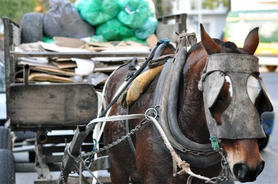 Argentina: Concordia avanza contra la tracción animal