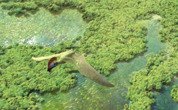 Las Hoyas es un laboratorio excepcional de la vida en la Tierra
