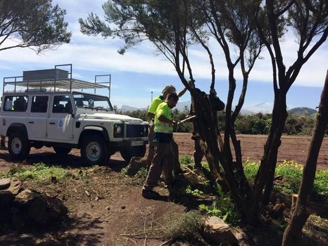 El Cabildo de Tenerife destina 664.000 euros a labores de limpieza para prevenir incendios forestales