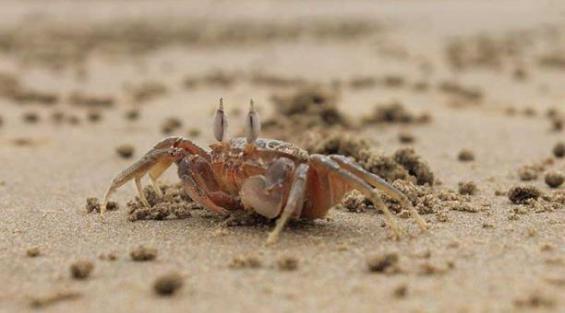 Colombia. Descubren dos especies de cangrejos cavernícolas
