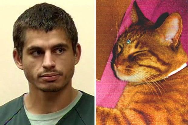 16 años de cárcel por maltrato animal a un asesino de gatos en EEUU