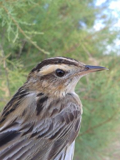 Global Nature invita a celebrar el Día Mundial de las Aves Migratorias en la laguna de La Nava
