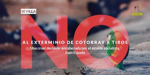 Sevilla exterminará a golpe de escopeta a las cotorras