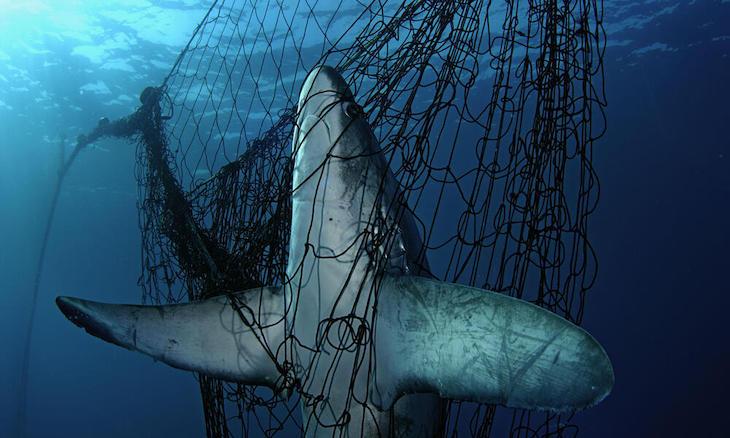 La extinción por sobrepesca se agrava