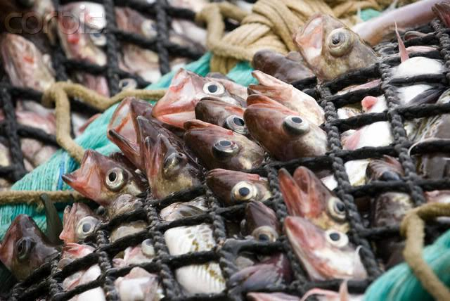 La crisis pesquera que se avecina