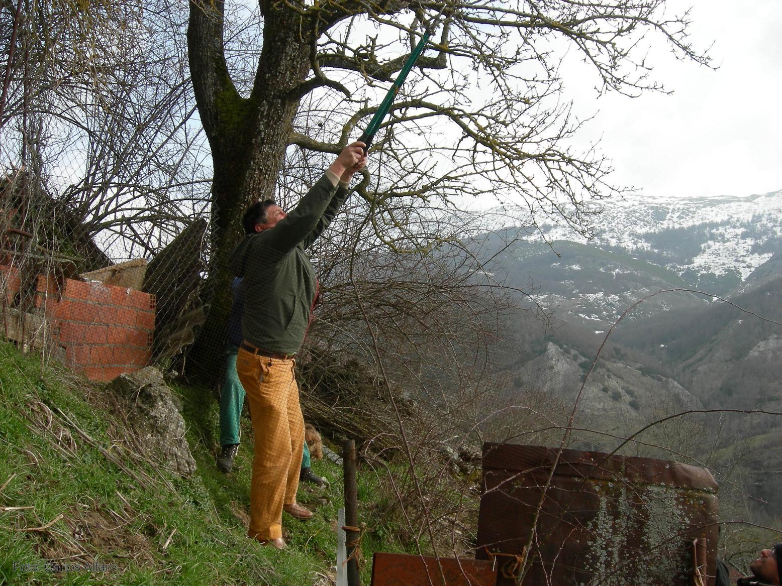 Un proyecto trata de recuperar los árboles frutales adaptados al clima de la provincia de León