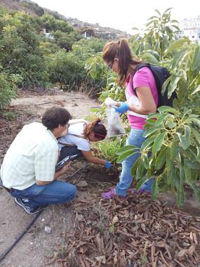 Arboles de aguacates sin hongos gracias a un abono ecológico