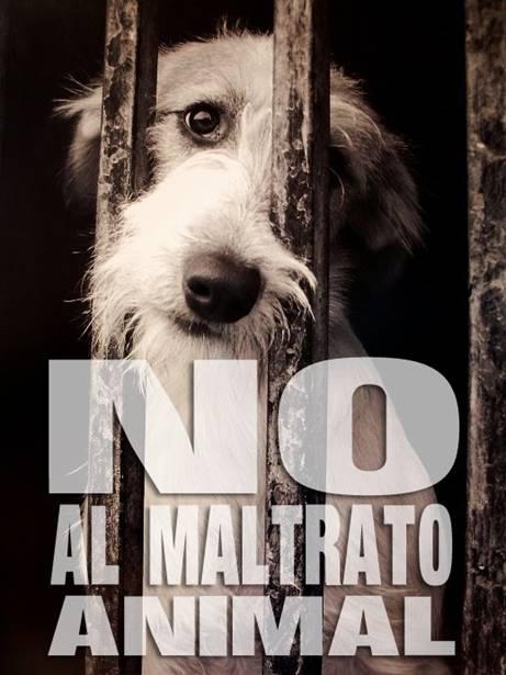 Falta de voluntad política para poner fin al abandono y maltrato animal generalizado en España