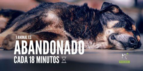 En Cataluña se abandona un animal cada 18 minutos