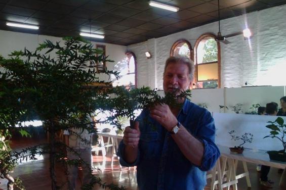 Argentina: En Oberá cultivan bonsáis de especies autóctonas