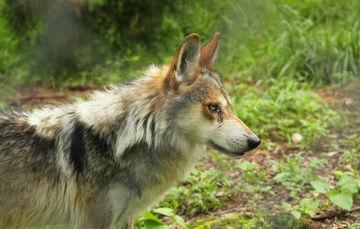 México impulsa la conservación de la fauna y el buen trato a esas especies