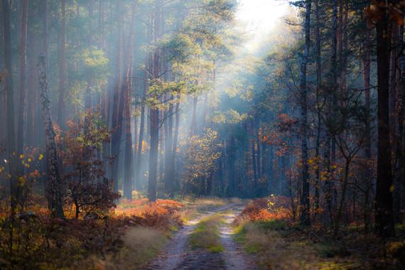 ¿Cuál es el valor real de un bosque? Aquí te lo explicamos