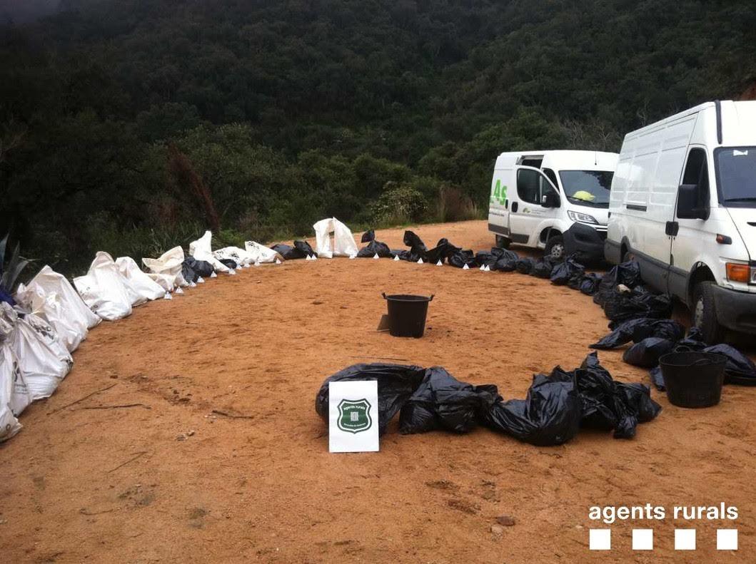 Encuentran casi 90 cadáveres de gatos y perros en La Selva (Girona)